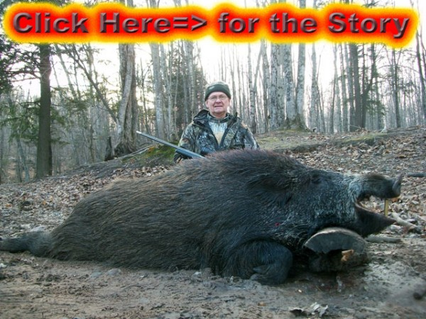 Spot and Stalk Boar Hunting