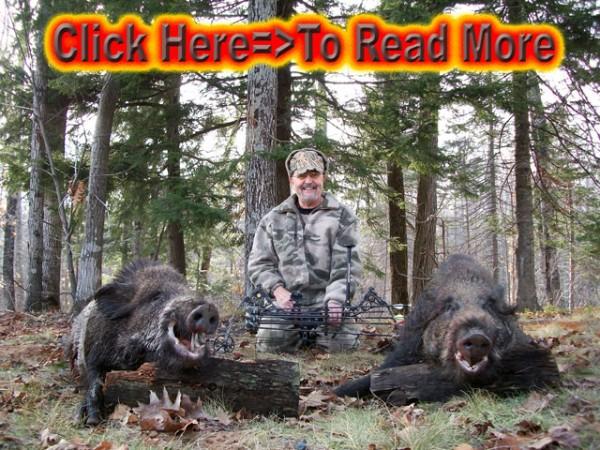 Wild Wild Giant Boar